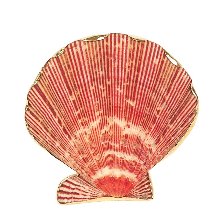 Gold Custom Framed Seashell Brooch 1