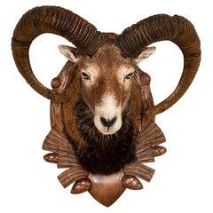 Armenian Mouflon Sheep Trophy Mount