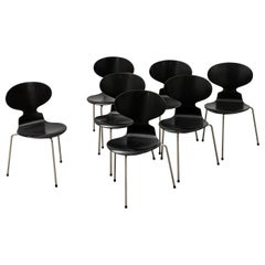 Arne Jacobsen Ant Chairs, Original Set from Early Production, 1952