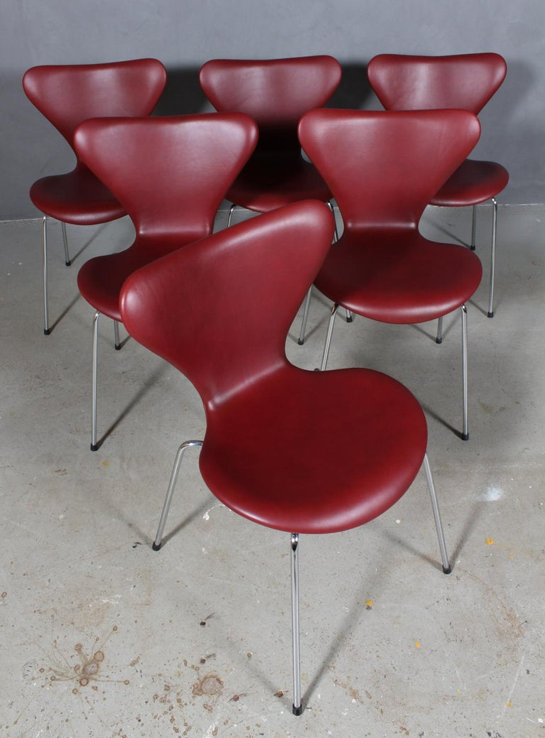Arne Jacobsen dining chair new upholstered with Indian red Elegance aniline leather.  Base of chrome steel tube.  Model 3107 Syveren, made by Fritz Hansen.