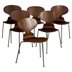 Arne Jacobsen, Set of 6 ANTm Chairs Model 3100