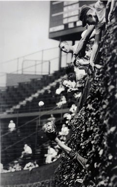 Catcher in the Vines, 1961, Wrigley Field, Chicago, Archival Pigment Print