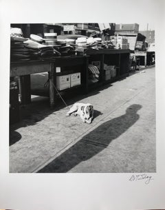 Maxwell Street Dog, Black & White Street Photography, Chicago, 1953 by Art Shay