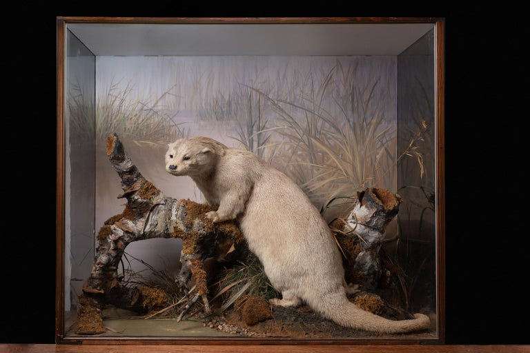 British Artful Diorama with Full Mount European Otter 'Lutra Lutra' by Peter Spicer For Sale