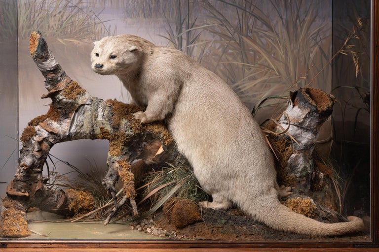 Hand-Crafted Artful Diorama with Full Mount European Otter 'Lutra Lutra' by Peter Spicer For Sale