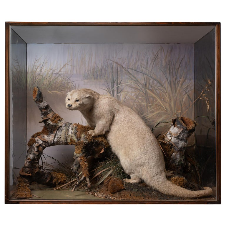Artful Diorama with Full Mount European Otter 'Lutra Lutra' by Peter Spicer For Sale