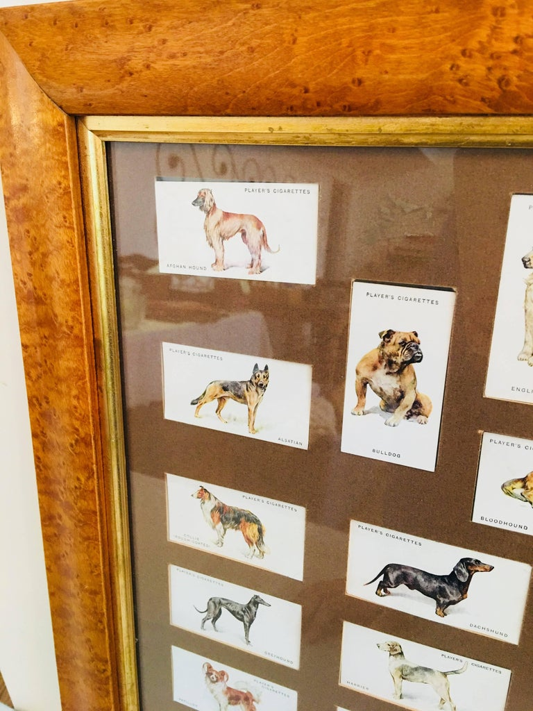 Arthur Wardle custom framed cigarette cards 50 dog themed players cigarette cards painted by Arthur Wardle With exposed back to view dog descriptions.
