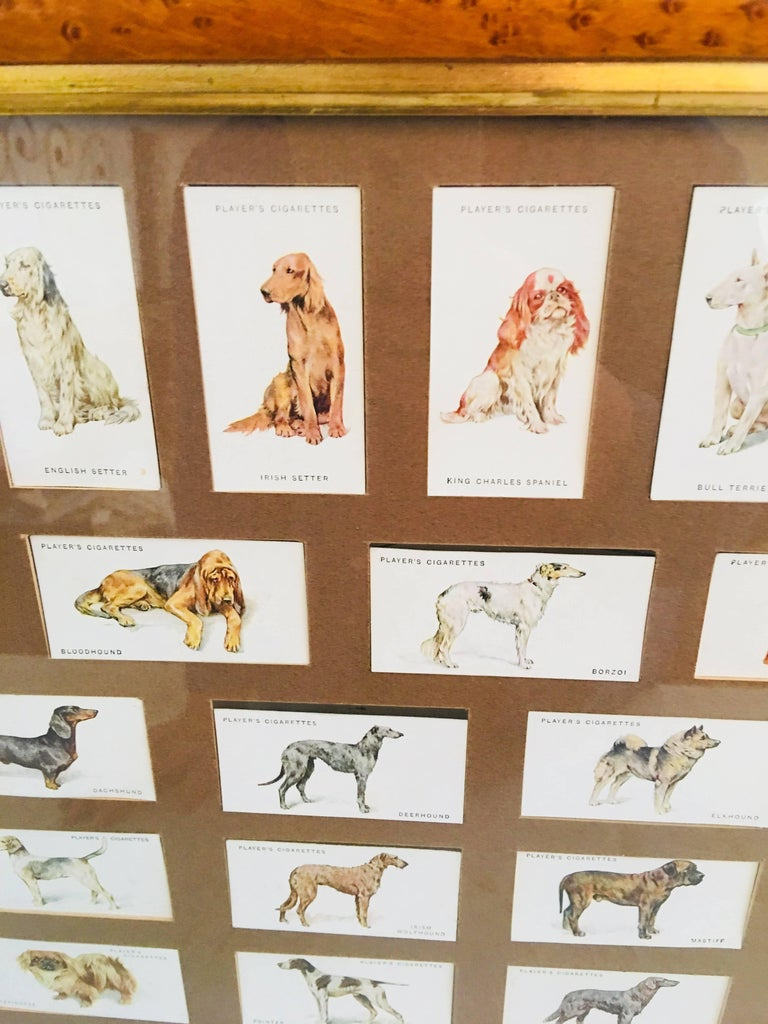 English Arthur Wardle Framed Cigarette Cards