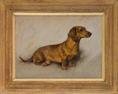 A well behaved Dachshund - dog, oil painting