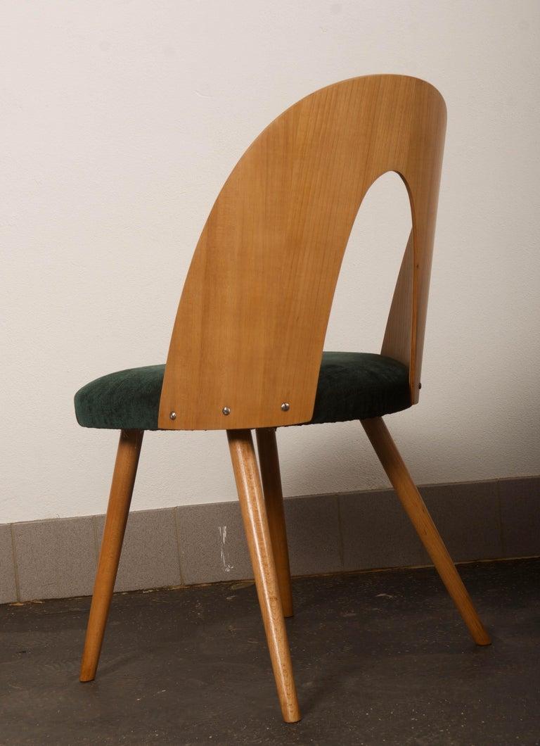 Mid-Century Modern Ash Dining Chairs by Antonin Suman for Tatra