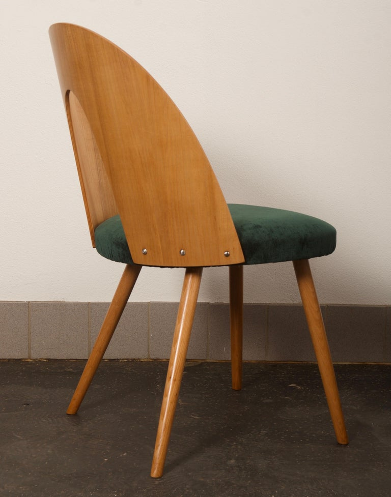 Czech Ash Dining Chairs by Antonin Suman for Tatra