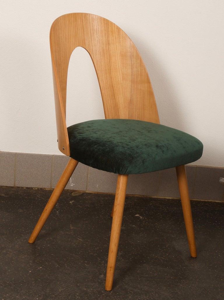 Veneer Ash Dining Chairs by Antonin Suman for Tatra