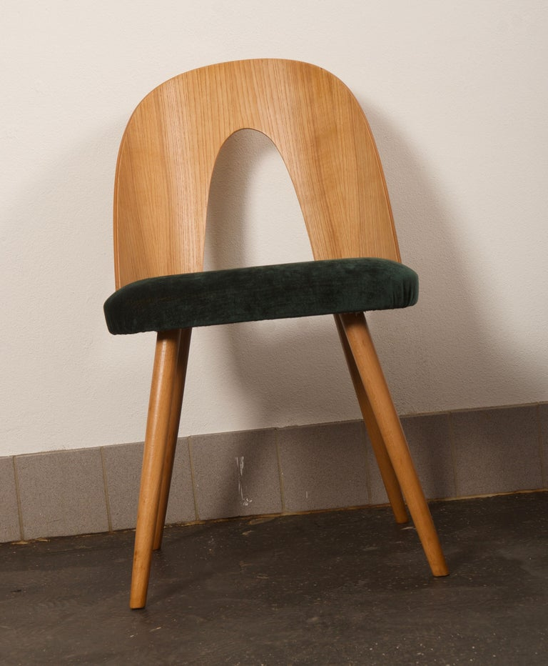 Mid-20th Century Ash Dining Chairs by Antonin Suman for Tatra