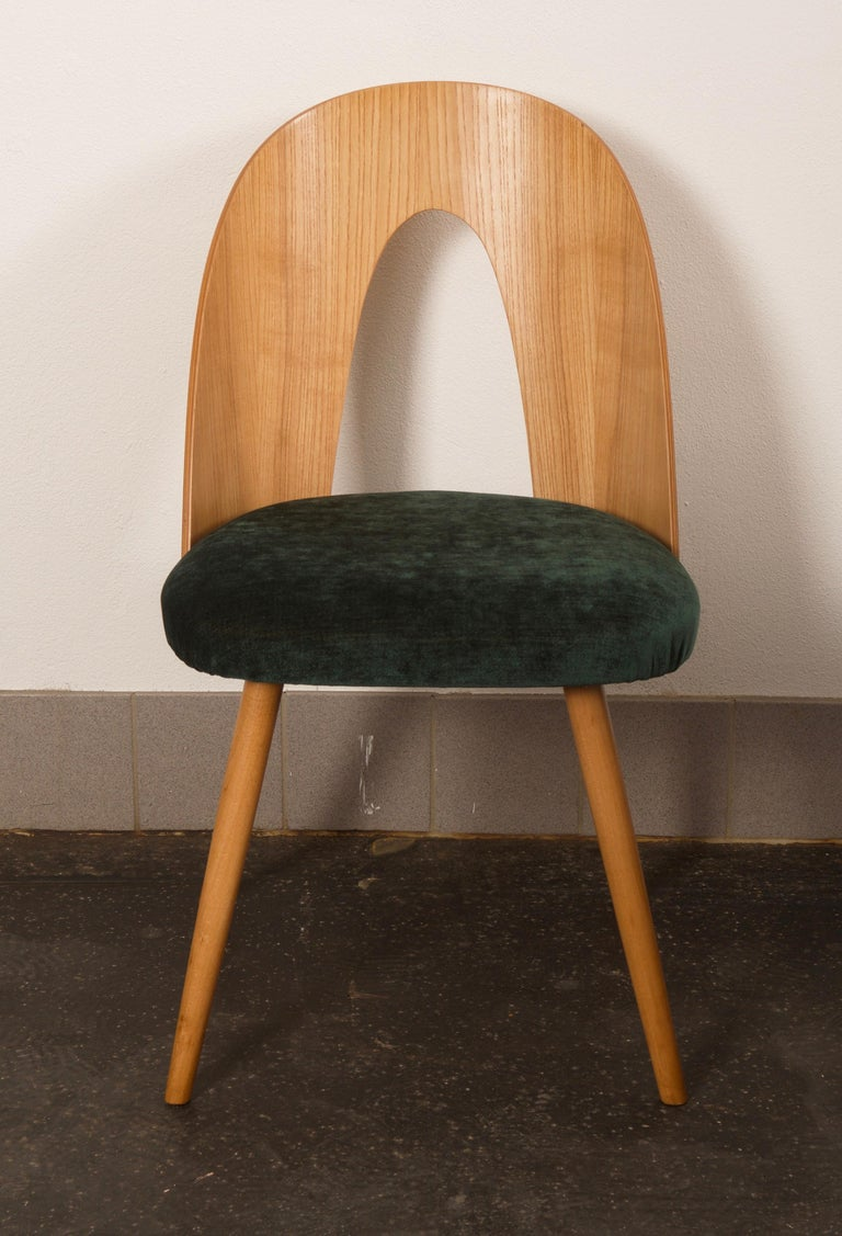 Ash Dining Chairs by Antonin Suman for Tatra 1