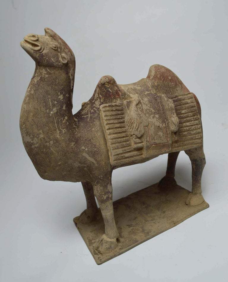 Asian Chinese Art Antique Bactrian Camels circa 15th Century Ex Christie's HK In Good Condition For Sale In London, GB
