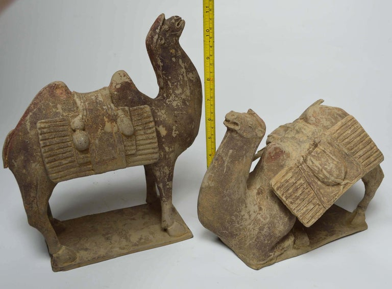 Asian Chinese Art Antique Bactrian Camels circa 15th Century Ex Christie's HK For Sale 2
