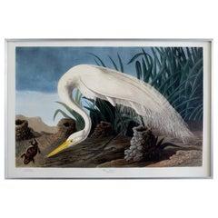 Audubon White Heron Plate #386 Havell