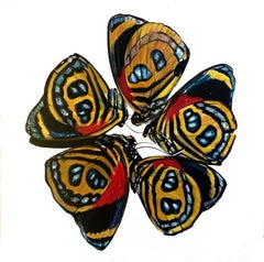 Contemporary Photorealist Oil Painting Moths Female Artist Red Yellow Blue
