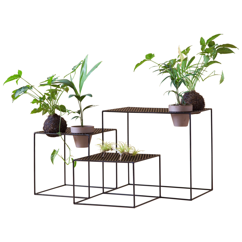 Aurea Plant Stand 4 by Sofia Alvarado