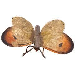 Austrian Bronze Butterfly, Moth
