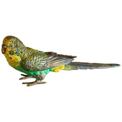 Austrian Cold Painted Bronze Budgerigar