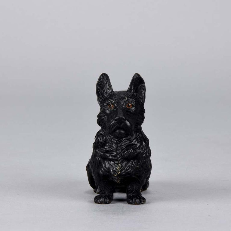 A very fine Austrian cold painted bronze of a seated terrier. The bronze has excellent original naturalistic cold painted colors and fine intricate detail, signed with the Bergman 'B' in an amphora vase.