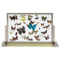 """Aux Papillons"" 'Butterflies' Display Cabinet by Jean-Charles Moreux, circa 1930"