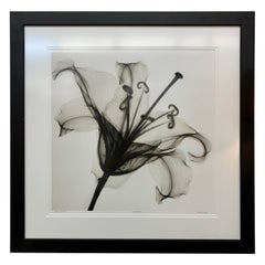 """Avon Collection Original Signed Steven N. Meyers Photograph """"Lily Muscadet"""""""