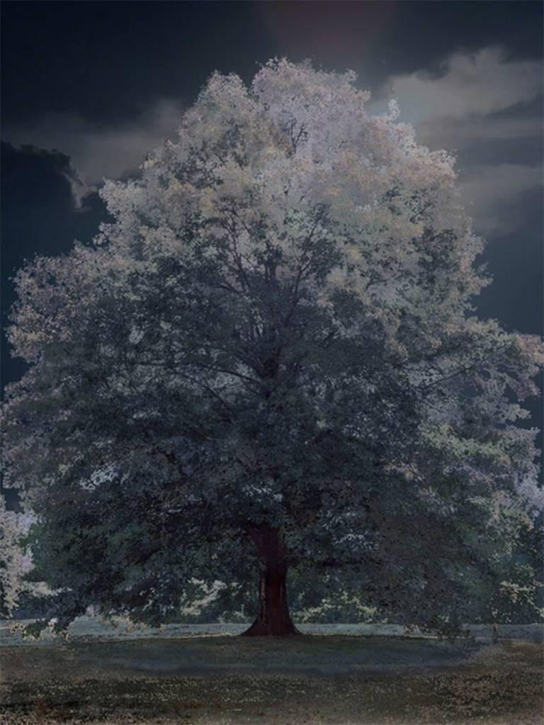 Berkshire Nocturne