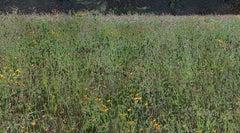 Field #14