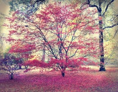 Autumn Hues by Barry Cawston. Large Photographic C Print with Acrylic Face Mount