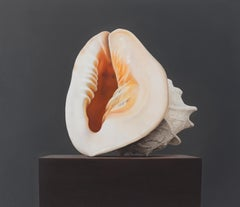 Shell - 21st Century Hyper Realistic Still-life painting of a Shell