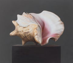 Shell (2) - 21st Century Hyper Realistic Still-life painting of a Shell