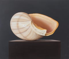 Shell (3) - 21st Century Hyper Realistic Still-life painting of a Shell