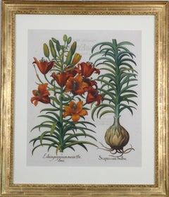 "Basilius Besler: ""Hortus Eystettensis"", Copper-plate Engraving with Frame, C1613"