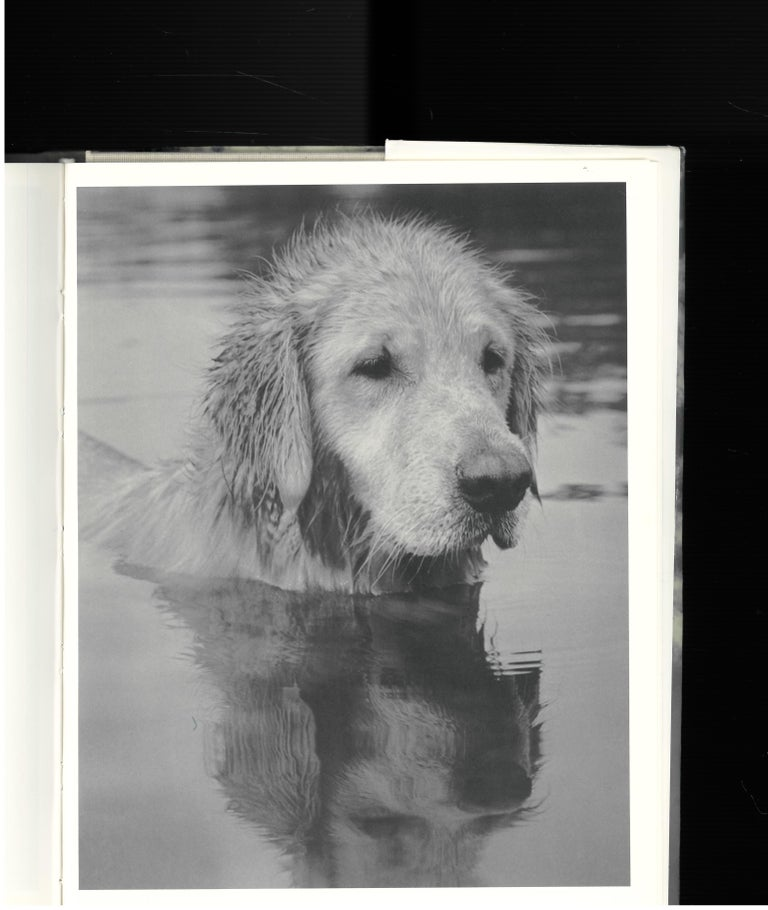 Bear Pond, Book of Photographs by Bruce Weber For Sale 5