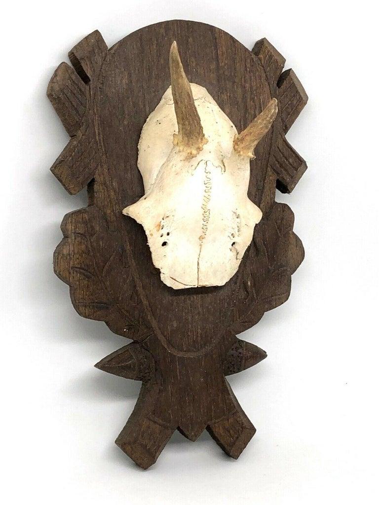 Hand-Carved Beautiful Abnormal Deer Antler Stag Taxidermy Trophy Vintage, German, 1980s For Sale