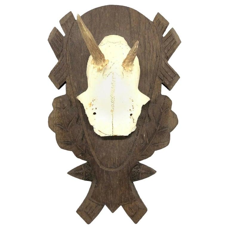 Beautiful Abnormal Deer Antler Stag Taxidermy Trophy Vintage, German, 1980s For Sale