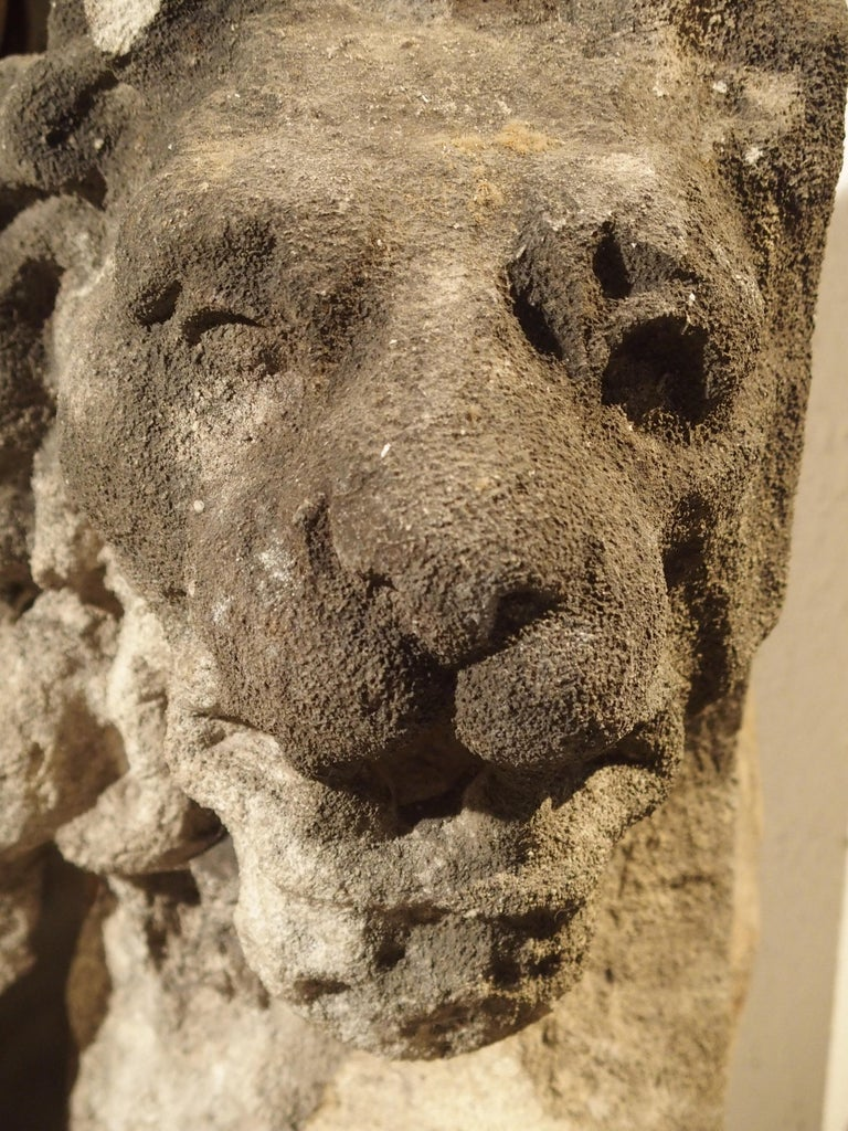 Beautiful Carved Limestone Lion Architectural, Burgundy France, 17th Century For Sale 6