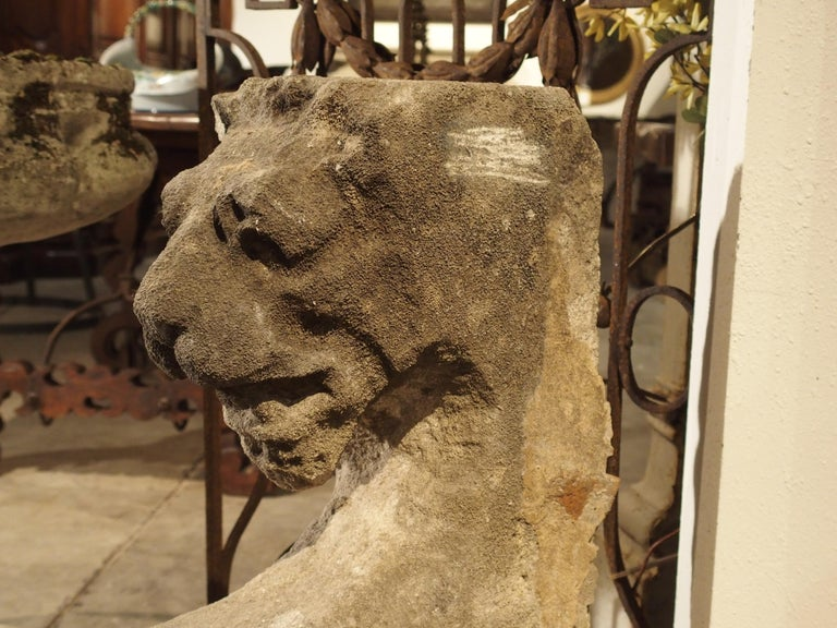 Beautiful Carved Limestone Lion Architectural, Burgundy France, 17th Century For Sale 2