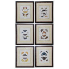 Beautiful Set of Six French 19th Century Framed Hand Color Engraved Butterfly
