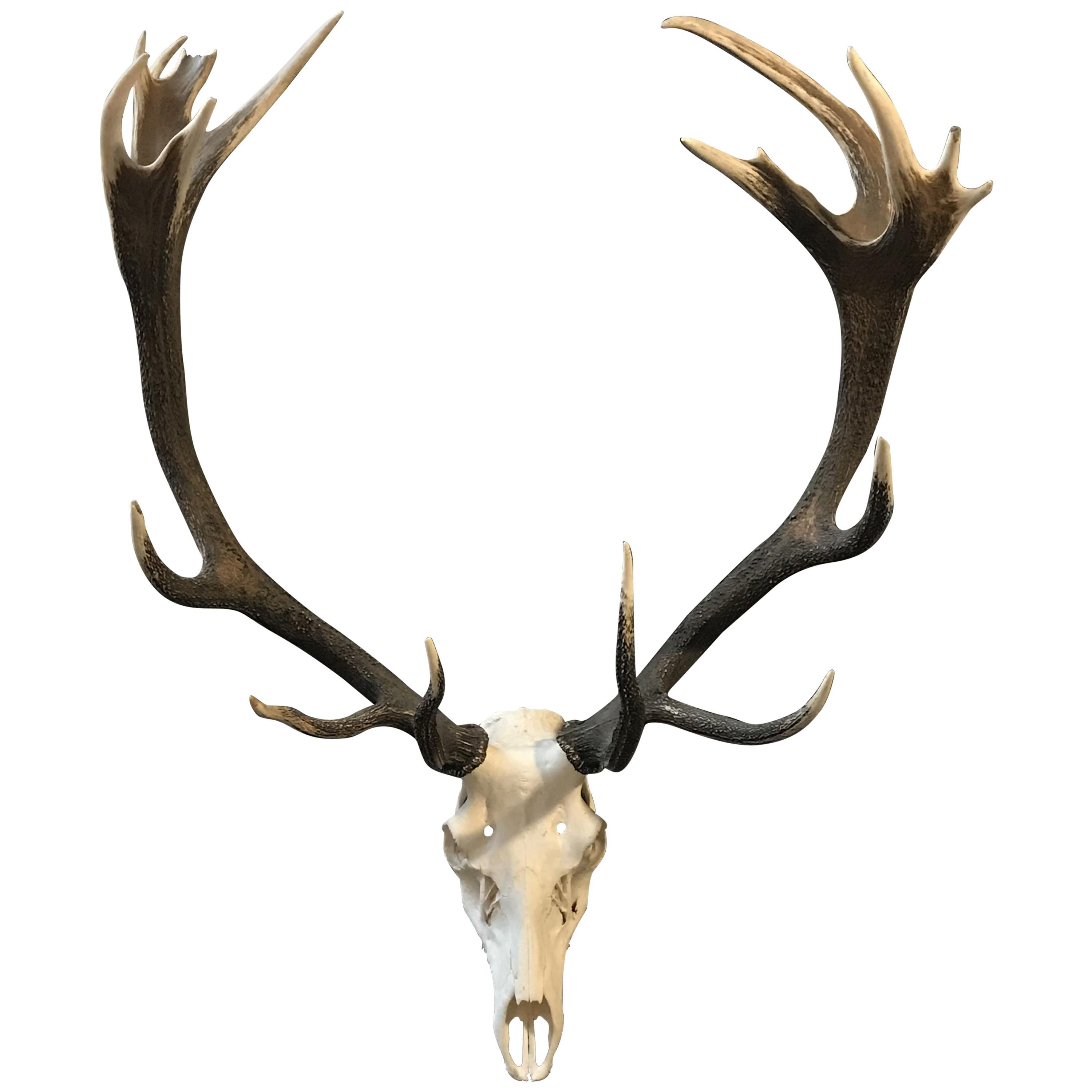 Other Antique Decorative Arts Antique Deer Antlers With Beautiful Patina.