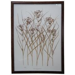 "Becky Davis Botanicals Nutgrass Cyperus Esculentus Floral Wheat 61"""