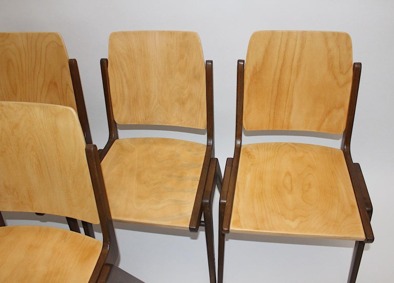 Beechwood Bicolor Brown Mid-Century Modern Vintage Dining Chairs, Franz Schuster For Sale 13