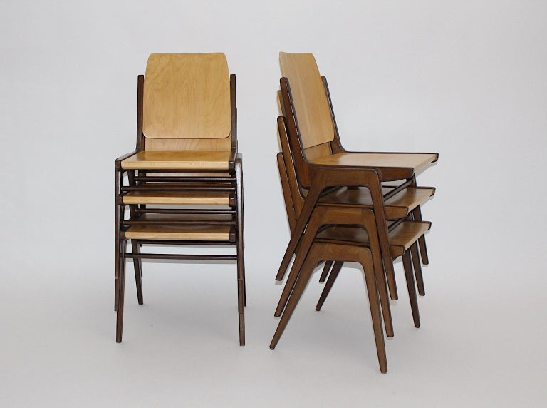 A beechwood bicolor brown Mid-Century Modern vintage set of 12 dining chairs / chairs designed by Franz Schuster 1959, which were executed by Wiesner Hager Austria. The dining chairs or chairs show the practical feature to stack them if necessary.