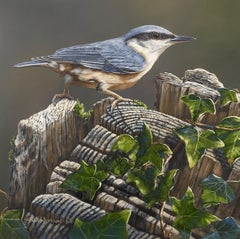 'Nuthatch' Contemporary Photorealist painting of a bird, nature realistic