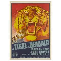 Bengal Tiger / La Tigre del Bengala