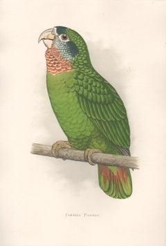 Jamaica Parrot, Antique Bird Parrot Chromolithograph, circa 1885