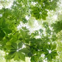 """Canopy Suite 400-126"" - Composite Landscape Photography - JMW Turner"
