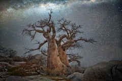 Beth Moon, Vela, 2016, From the Ancient Skies, Ancient Trees series. 20 x 30